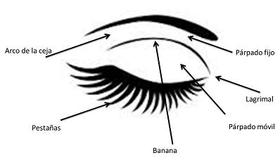 Partes del ojo y su maquillaje
